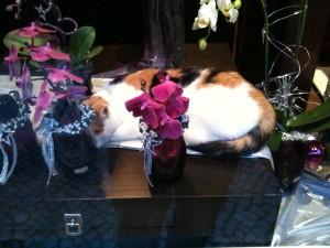 """Katze im Schaufenster - """"Ich bin dann mal weg!"""""""
