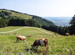 Das bayrische Natur in schönster Idylle