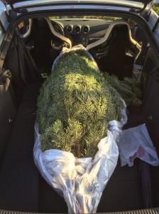 Nächstes Jahr darf der Baum dann durchaus noch etwas größer sein..